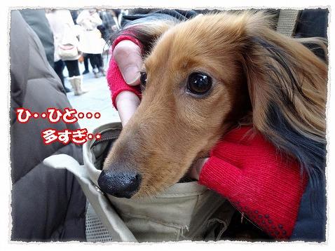 2014_1_11_2.jpg