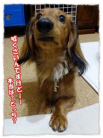 2014_1_9_5.jpg