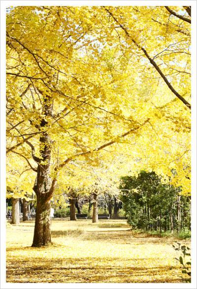 2012-11-27-28_convert_20121203191214.jpg