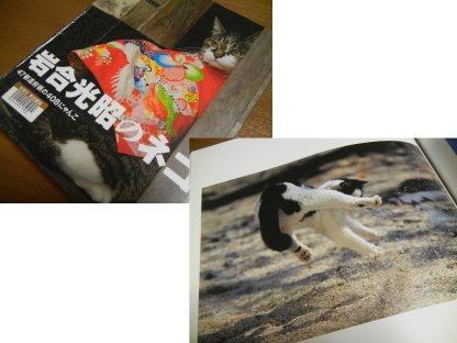 「岩合光昭のネコ」