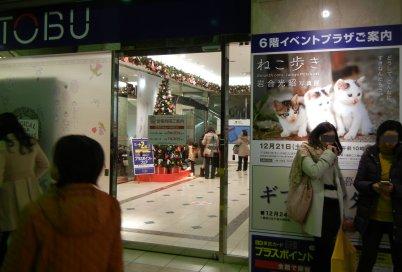 東武・岩合猫の写真展