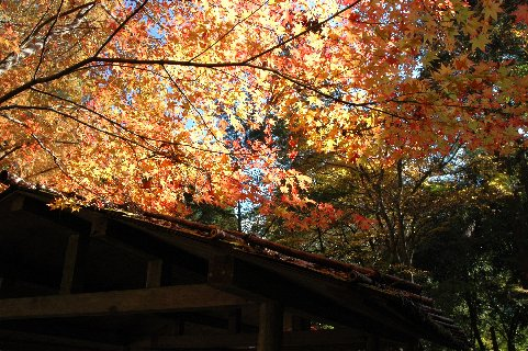 開山堂付近のわずかな紅葉