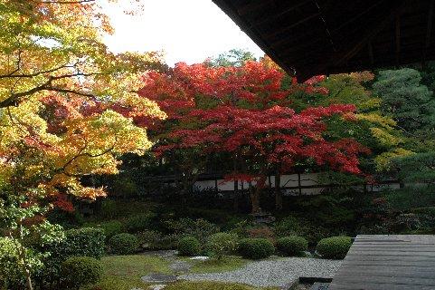 泉湧寺2・御座所庭園