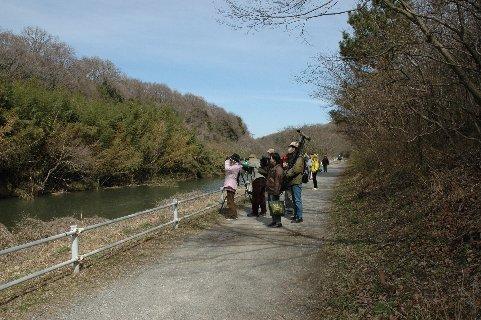 5オシドリ・柏井橋の上流
