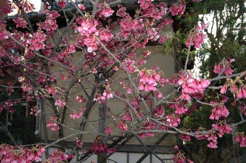 善性寺の花2