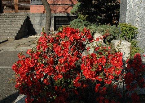 善性寺の花3