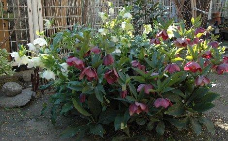 善性寺の花4