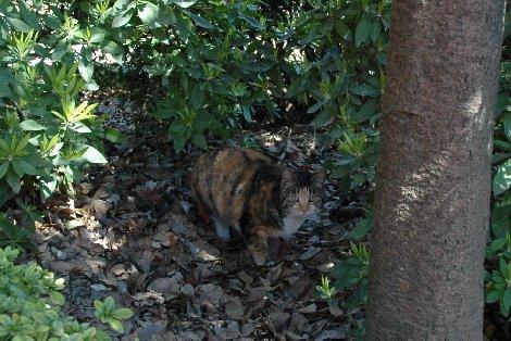 乙女稲荷の猫