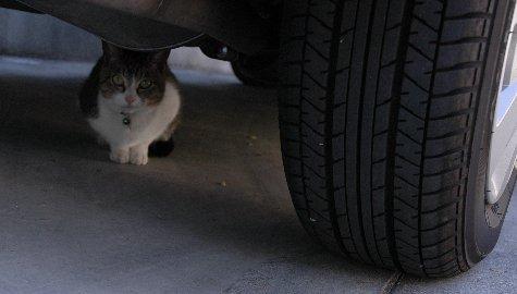 藪下通りの猫