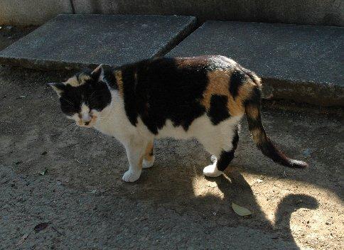 谷中霊園の猫2