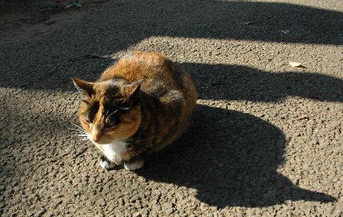 谷中霊園の猫3