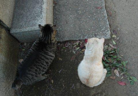 谷中霊園の猫4