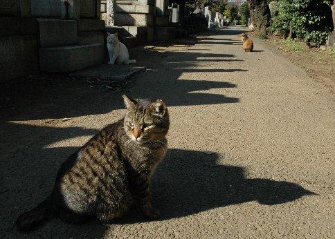 谷中霊園の猫5