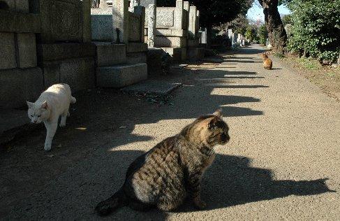 谷中霊園の猫6