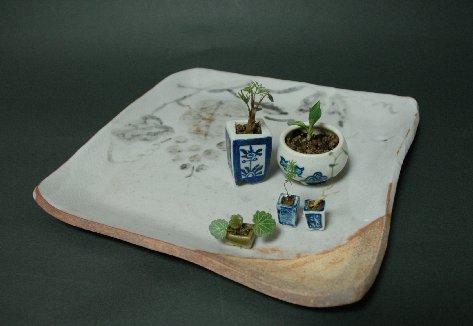 ミニ・まめ盆栽1