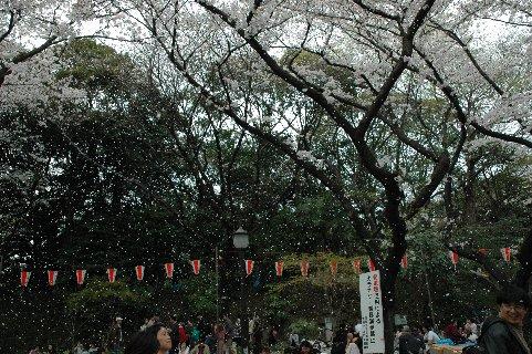 上野公園桜吹雪