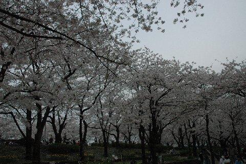 墨田公園1