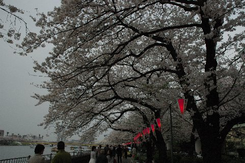 墨田公園2