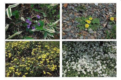 春の花々1