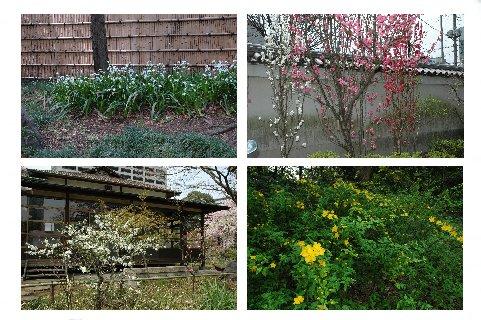 春の花々2