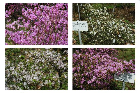 春の花々3