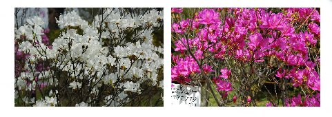 春の花々4
