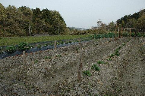 里山の畑2
