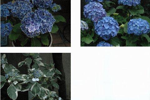 牛込界隈の花1