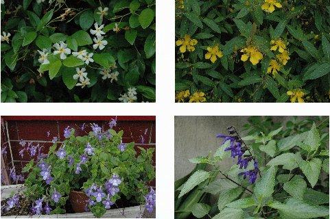 牛込界隈の花2