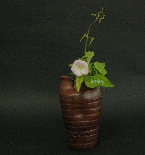 ユウガオの花