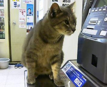 飯山満猫0812