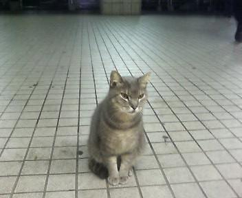 夜の飯山満猫
