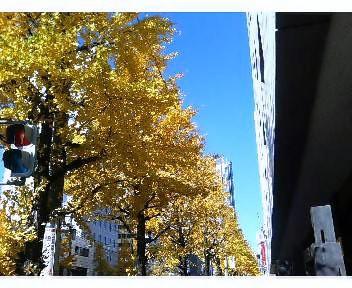 水道橋の銀杏の黄葉3