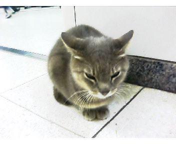 大晦日の飯山満駅猫