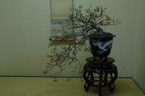 龍の鉢とツルウメモドキ