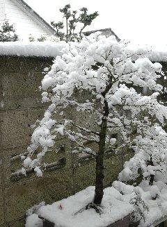 12時頃の雪の様子
