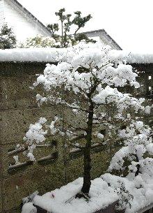 1時半頃の雪の様子