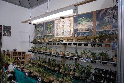 風蘭の販売店
