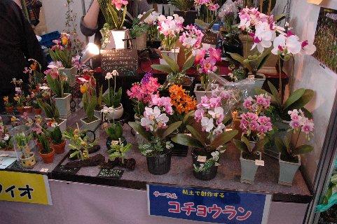 粘土の蘭鉢