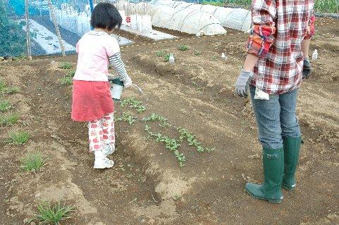 殺菌剤の散布