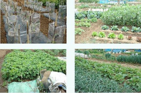先輩達の菜園
