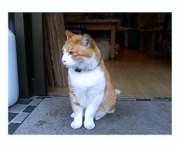 陶芸教室猫