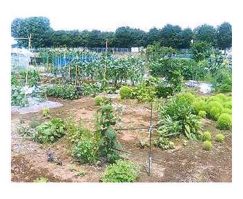 菜園の現状