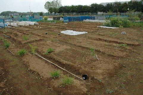 借りた当時の菜園の全貌