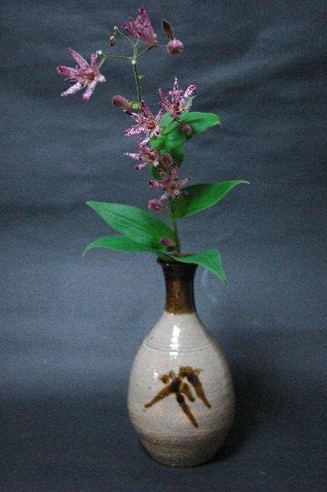 ホトトギスの切花