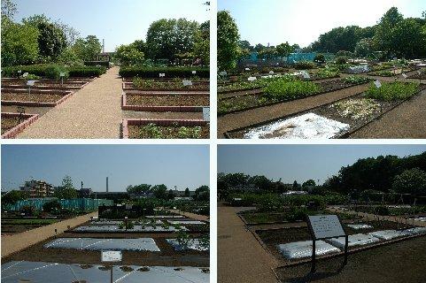 各種植物区
