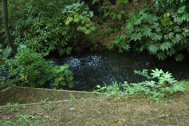 その前に、平行して流れる新堀用水