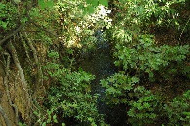 玉川上水2