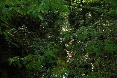 玉川上水3