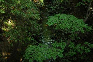 玉川上水5